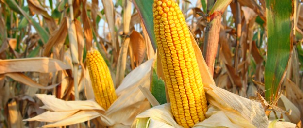 Corn Dry Down Rates – Questions Answered!